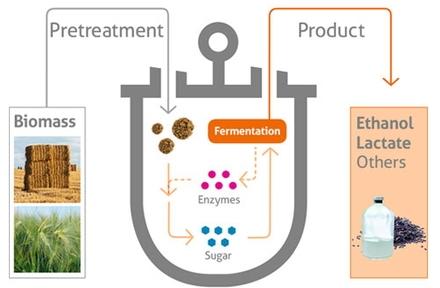 Reciclagem de biomassa
