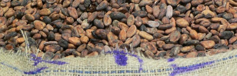 Chocolate Manufacture